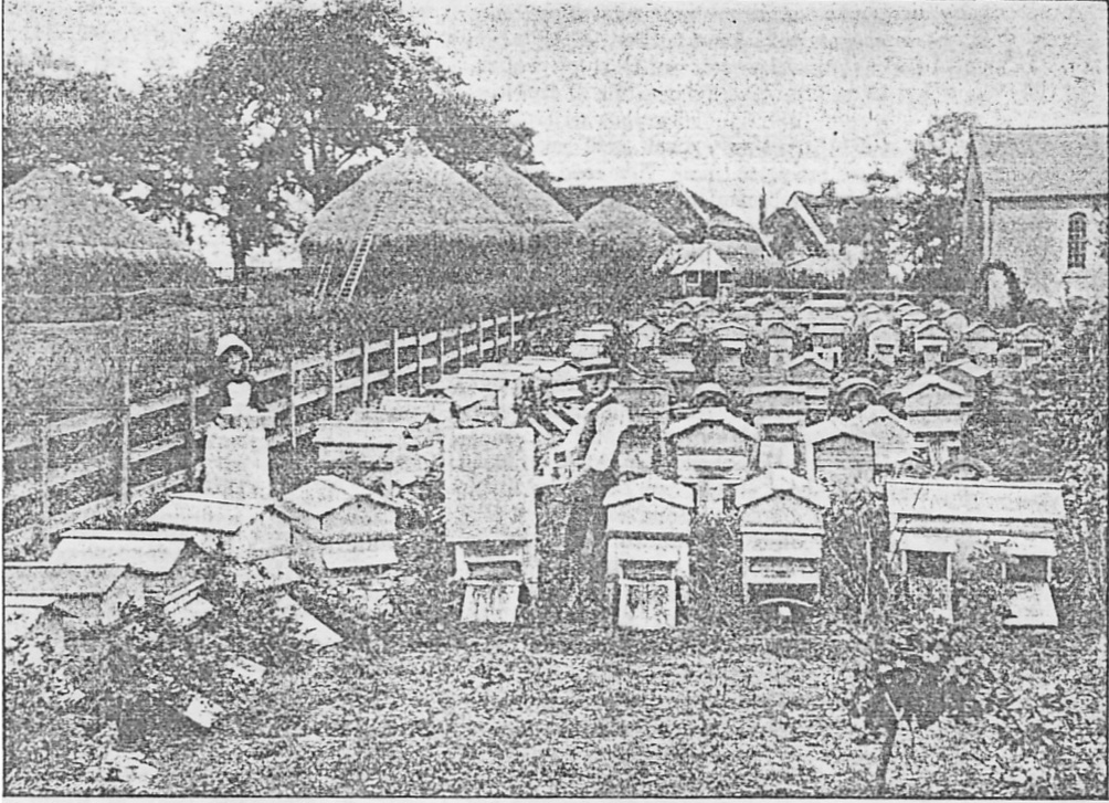 Mr Woodley's apiary